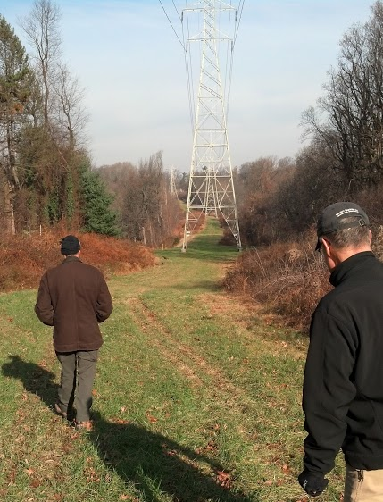 Walking along Cresheim Trail